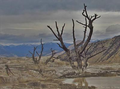 Photograph - Desolate Beauty by Teri Ridlon
