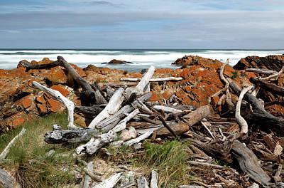 Photograph - Desolate Shore by Nicholas Blackwell