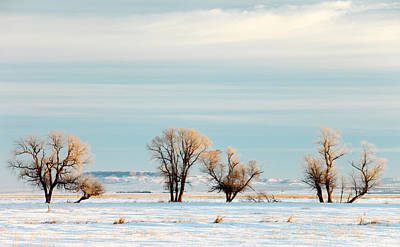 Field. Cloud Photograph - Desperate Trees by Todd Klassy