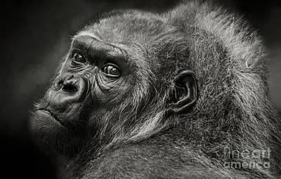 Photograph - Desperation by Eva Lechner