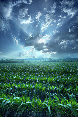 Photograph - Despite The Rain by Phil Koch