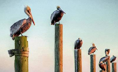 Destin Pelicans-the Peanut Gallery Art Print