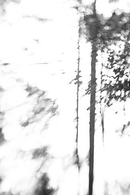 Photograph - Detachable Forest  by Leapdaybride Visual Arts