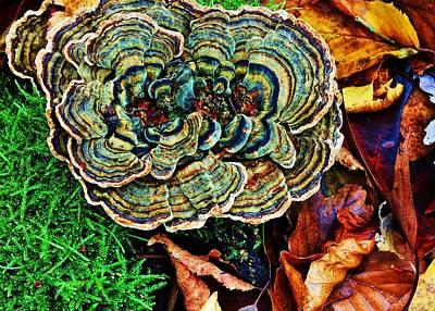 Taunus Photograph - Detail, Forest Floor  by Daniel Koglin