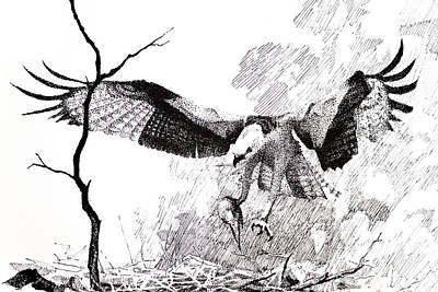 Osprey Drawing - Detail From Osprey by Paul Illian