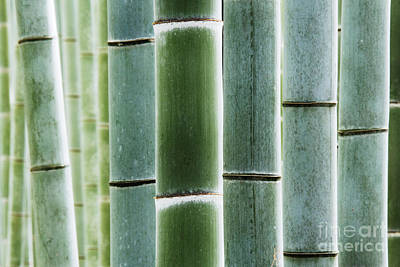 Detail Of Bamboo In A Forest Art Print by Jeremy Woodhouse