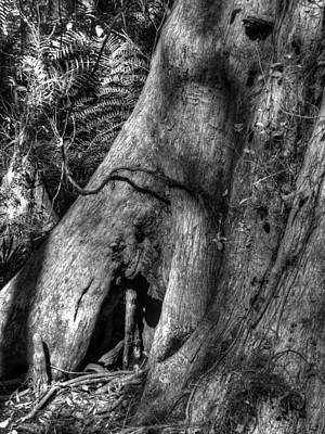 Cotee River Photograph - Detail Of Cypress by Phil Penne