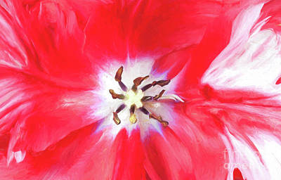 Digital Art - Detail Of Estella Rijnveld Parrot Tulip by Liz Leyden