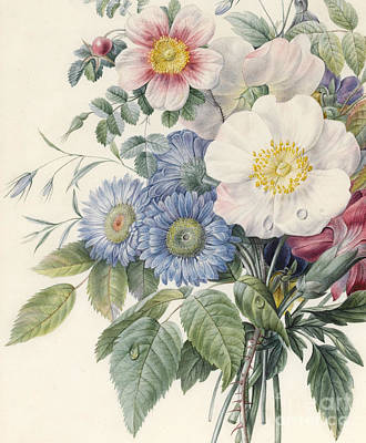 Wild Rose Painting - Detail Of Flowers by  Eugene A L d'Orleans