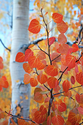 Photograph - Detail of the Red Aspens No.2 by Terrance Emerson
