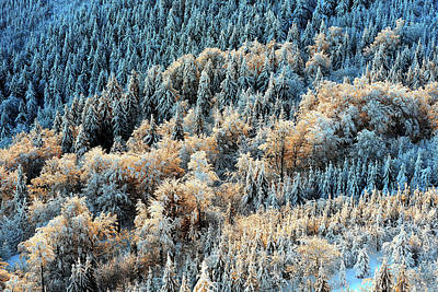 Photograph - Detail View At Colorful Trees From Jested Mountain Peak. Cold Winter Morning Forest, Czech Republic. by Marek Kijevsky