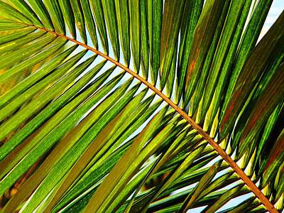 Photograph - Detailed Palm Leaf by Debbie Oppermann