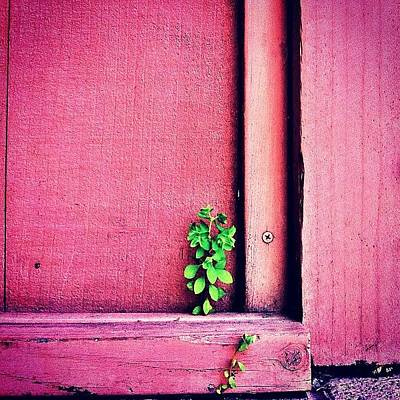 Green Wall Art - Photograph - Determination by Julie Gebhardt