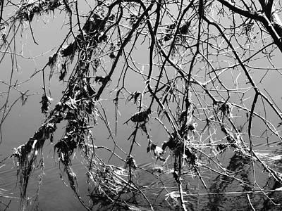 Photograph - Detritus by Stephanie Moore