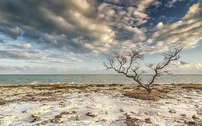 Photograph - Devastation Beach by Framing Places