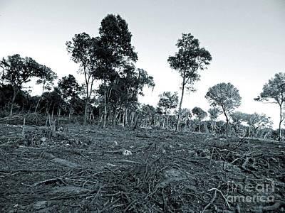 Photograph - Devastation by D Hackett