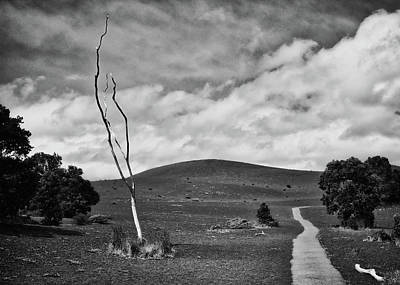 Photograph - Devastation Trail by Susan Rissi Tregoning