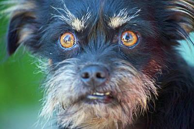 Photograph - Devil Dog by Eric Tressler