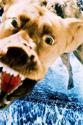 Photograph - Devil Dog Underwater by Jill Reger