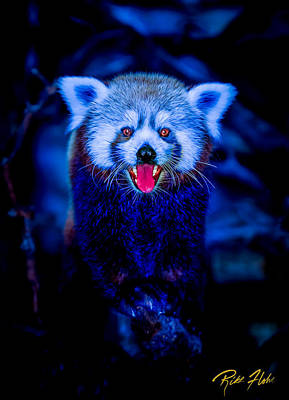 Photograph - Devil Panda by Rikk Flohr