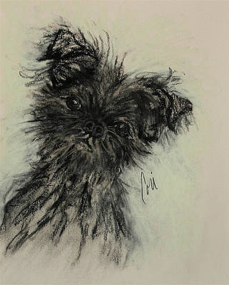 Affenpinscher Drawing - Devil Wears Black by Cori Solomon