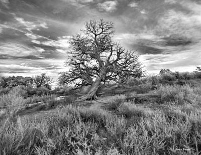 Photograph - Devils Canyon Tree by Jamieson Brown