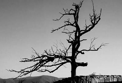 Devoid Of Life Tree Art Print