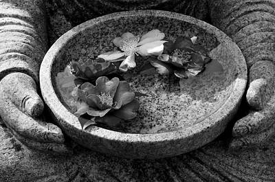 Camellia Photograph - Devotional Black-and-white Version by Dean Harte