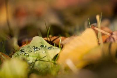 Photograph - Dew And Gingko  by Bulik Elena