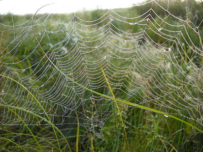 Photograph - Dew Covered September Spider Web by Kent Lorentzen