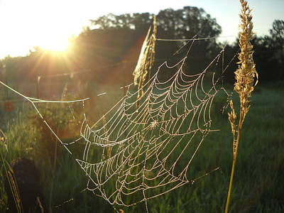 Photograph - Dew Covered Spider Web At Sunrise by Kent Lorentzen