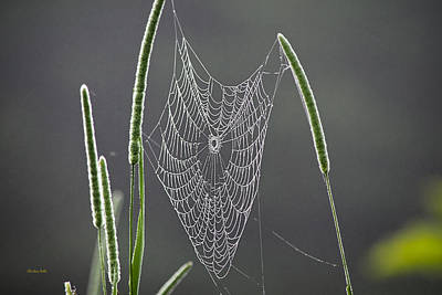 Photograph - Dew Covered Spider Web by Christina Rollo