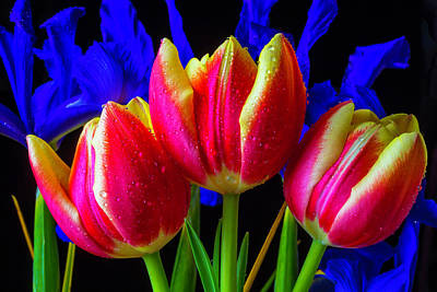 Dew Covered Tulips And Iris Art Print