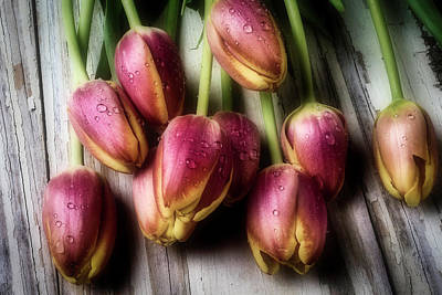 Dew Covered Tulips Art Print by Garry Gay