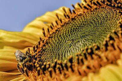 Photograph - Dew Drop Bee.... by Paul Vitko