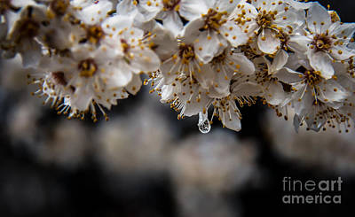 Photograph - Dew Drop by Robert Bales