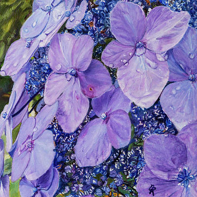 Painting - Dew Drops On Lacecap Hydrangea by Sharon Bignell