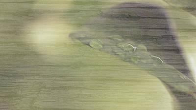 Photograph - Dew Drops On The Leaf A Fine Art by Jacek Wojnarowski