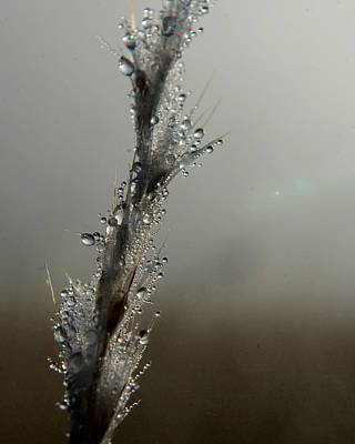 Photograph - Dew Drops Renew by Karen Musick