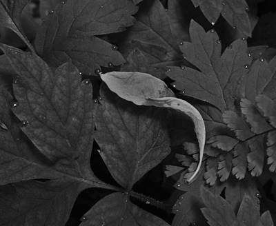 Photograph - Dew Drops With Leaf by Charles Lucas