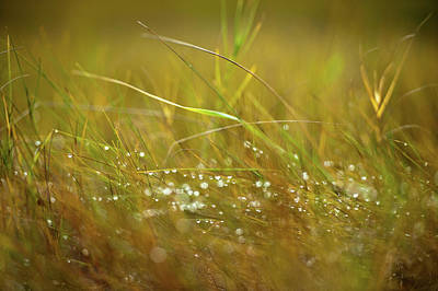 Photograph - Dew by John Whitmarsh
