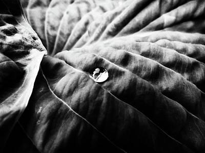 Photograph - Dew by Karen Stahlros