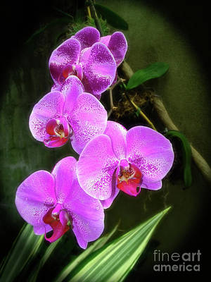 Dew-kissed Moth Orchids Art Print