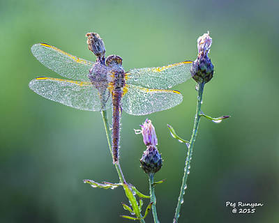 Photograph - Dew Laden Dragonfly by Peg Runyan