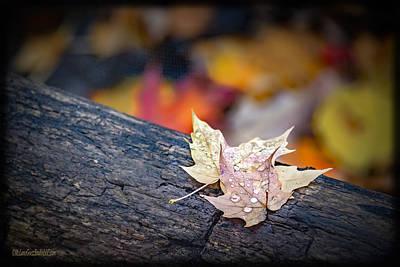 Photograph - Dew Maple Log by LeeAnn McLaneGoetz McLaneGoetzStudioLLCcom