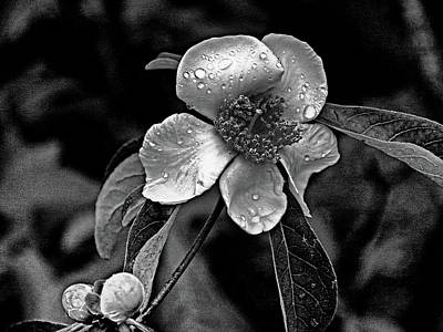 Photograph - Dew On Flower by Bill Jonscher