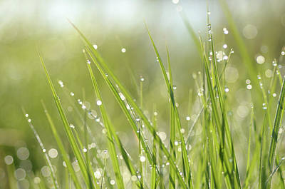 Photograph - Dew On Grass by Janet Rockburn