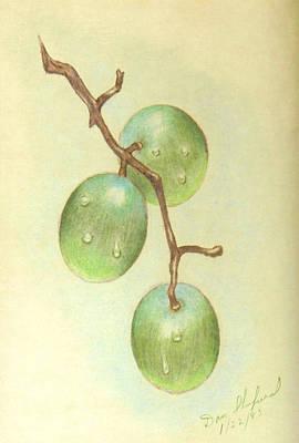 Dew On White Grapes Art Print