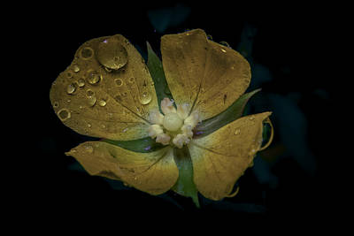 Photograph - Dew To Drought 546 by Karen Musick