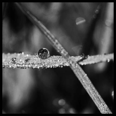 Photograph - Dew To Drought Black And White 03 by Karen Musick